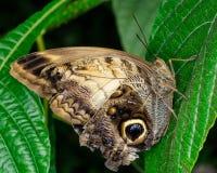 Motyli szczegóły Obrazy Stock