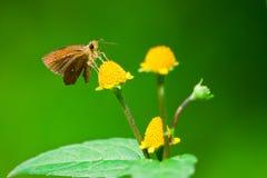 Motyli Thailand Zdjęcia Stock