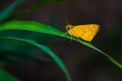 Motyli tropikalny las Obraz Stock