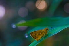 Motyli tropikalny las Zdjęcia Stock