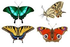 Motyli Tygrysi Swallowtail - Wektorowy wizerunek Obraz Stock