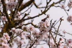 Motyli wiosna kwiaty Fotografia Royalty Free