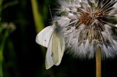 motyli życzenia Fotografia Royalty Free