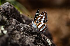 Motyli zbliżenie strzał na skale obrazy stock
