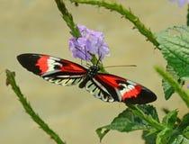 Motyli zbliżenie Obrazy Royalty Free