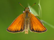 motylia łąka Fotografia Stock