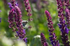 Motylia łąka Obrazy Stock