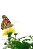 motylia dama malował Zdjęcie Royalty Free