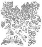 Motylia ilustracja royalty ilustracja