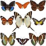 Motylia Kolekcja Zdjęcia Royalty Free