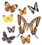 Motylia kolekcja Zdjęcia Stock