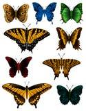 motylia kolekcja Obrazy Stock