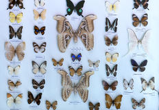Motylia kolekcja w rezerwacie przyrody zawiera Zdjęcie Stock