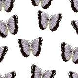 Motylia kreskówka rysuje bezszwowego wzór, wektorowy tło Abstrakcja rysujący insekt z lilym purpurowym czernią uskrzydla na biały royalty ilustracja