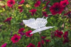 Motylia lampa w kolorach petunie Obrazy Royalty Free