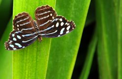 Motylia osuszka Po burzy Zdjęcie Stock