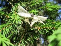 Motylia para Zdjęcie Stock