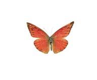 motylia pomarańcze Obraz Royalty Free