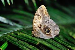 Motylia pozycja na liściu Fotografia Royalty Free