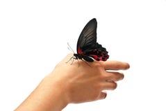 motylia ręka Obrazy Stock