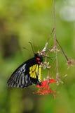 motylia roślina Obrazy Stock
