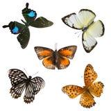 Motylia ustalona kolekcja Zdjęcia Stock