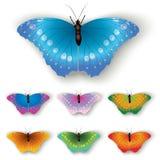 motyliego koloru odosobniony biel royalty ilustracja