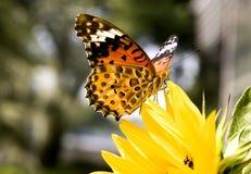 motyliego kwiatu kolor żółty Obrazy Stock