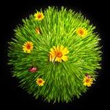motyliego kwiatu trawa Obrazy Stock