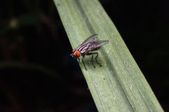 mouche Photographie stock