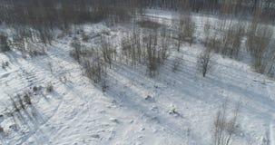 Mouche aérienne au-dessus de forêt nue de bouleau un jour ensoleillé d'hiver images stock