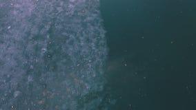 Mouche aérienne au-dessus de glace sur l'eau banque de vidéos