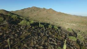 Mouche aérienne de montagne de l'Arizona d'hymne plus de clips vidéos