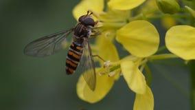 Mouche accrochant sur une fleur jaune Photos libres de droits