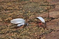 Mouche artificielle pour la pêche de mouche Photographie stock