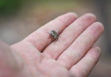 Mouche d'insecte photos libres de droits