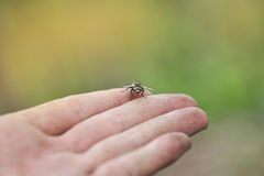 Mouche d'insecte image libre de droits