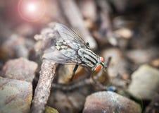 Mouche d'insecte image stock