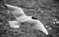 Mouche d'oiseau Photographie stock libre de droits