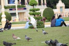 Mouche d'oiseau Photo stock