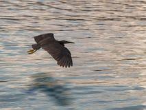 Mouche d'oiseau au-dessus de mer Images stock