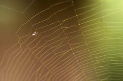 Mouche dans la toile d'araignée Photos stock