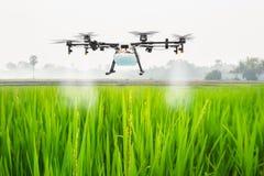 Mouche de bourdon d'agriculture à l'engrais pulvérisé sur les gisements de riz, concept futé de ferme photographie stock