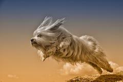 Mouche de chien de mouche Photos libres de droits