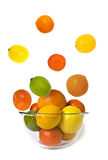 mouche de citron de cuvette Photographie stock libre de droits