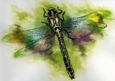 Mouche de dragon illustration de vecteur