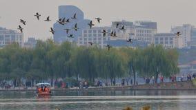 Mouche de liberté de Yuanyang Images stock