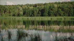 Mouche de mouette au-dessus de l'eau Oiseaux fky au-dessus du lac Un lac dans la forêt de pin banque de vidéos