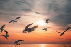 Mouche de mouette dans le ciel au lever de soleil photos libres de droits