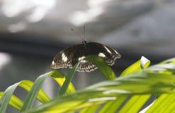 Mouche de papillon en nature de matin Photos libres de droits